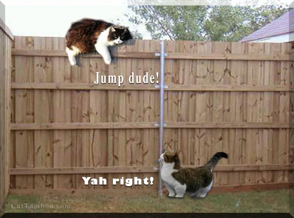 Munchkin-cat-memes