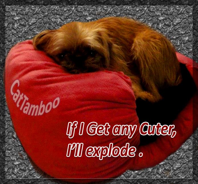 cute puppy meme