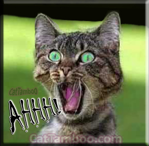 cat-meme-ahhh