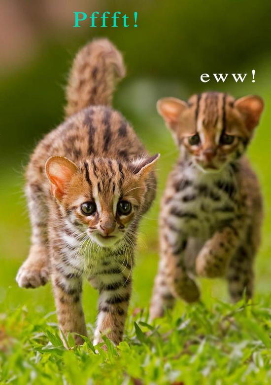 cat-memes-kitten-fart-face